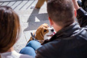 Fotos con mascota en Madrid © Pepa Malaga Fotografia